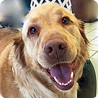 Adopt A Pet :: Duchess - BIRMINGHAM, AL