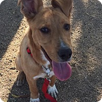 Adopt A Pet :: Noodles aka Tooty Fruity - Tucson, AZ