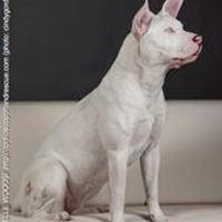 Adopt A Pet :: Elle Woods - justin, TX