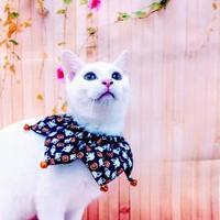 Adopt A Pet :: Joystick - McDonough, GA