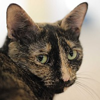 Adopt A Pet :: Mimosa - Richmond, VA