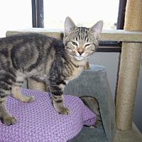 Adopt A Pet :: ERNIE - Medford, WI
