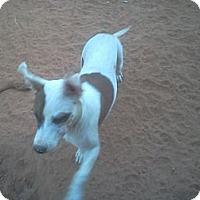 Adopt A Pet :: Gremlin - Blanchard, OK