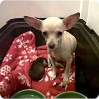 Adopt A Pet :: Mom-N-Pup - Chimayo, NM