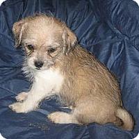 Adopt A Pet :: Gremlin - Chandler, AZ