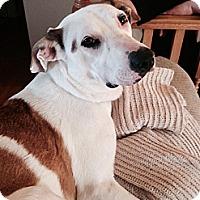 Adopt A Pet :: Sadie - Douglas, ON