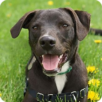 Terrier (Unknown Type, Medium) Mix Dog for adoption in Columbia, Illinois - Jerry