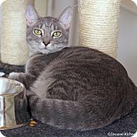 Adopt A Pet :: Minerva - St Louis, MO