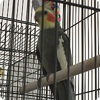 Adopt A Pet :: Kevin - Punta Gorda, FL