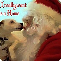 Adopt A Pet :: Baby - San Antonio, TX