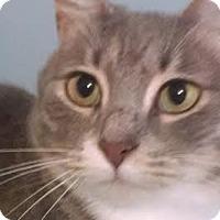 Adopt A Pet :: Roxie - Concord, NC