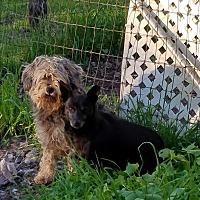 Adopt A Pet :: Jade - Red Bluff, CA