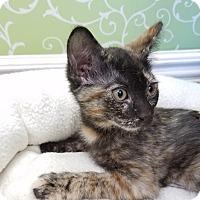 Adopt A Pet :: Bernadette - Red Wing, MN