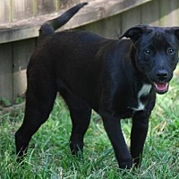 Adopt A Pet :: Kacey - Houston, TX