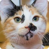 Adopt A Pet :: Freckles - Irvine, CA