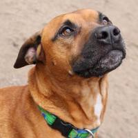 Adopt A Pet :: Dexter - Shohola, PA