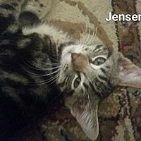 Adopt A Pet :: Jensen - Fort Pierce, FL