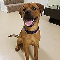 Adopt A Pet :: Hercules - Southbury, CT