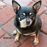 Adopt A Pet :: Gracie - Oklahoma City, OK