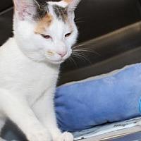 Adopt A Pet :: 25605 Star - Ellicott City, MD