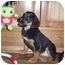 Photo 3 - Labrador Retriever/Rottweiler Mix Puppy for adoption in Franklin, Virginia - Kiya
