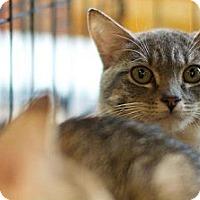 Adopt A Pet :: Jesi - New York, NY