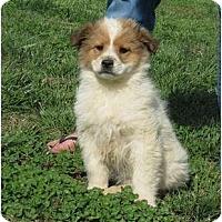 Adopt A Pet :: Tripper - Westbrook, CT