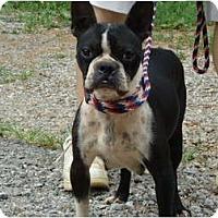 Adopt A Pet :: Hopie - Plainfield, CT