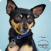 Adopt A Pet :: Tuck - Phoenix, AZ