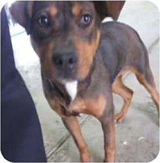 Shepherd (Unknown Type) Mix Dog for adoption in Sunnyvale, California - Hogan