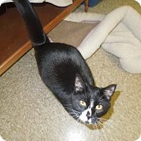 Adopt A Pet :: Maverick - Medina, OH