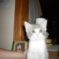 Adopt A Pet :: 35799475 - Clinton, MO