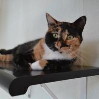 Adopt A Pet :: Betty - Covington, LA