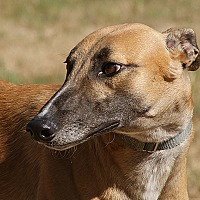 Adopt A Pet :: Keith - Portland, OR