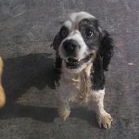 Adopt A Pet :: Lucky - Bonifay, FL