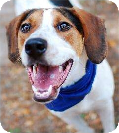 Foxhound Mix Dog for adoption in Jacksonville, Florida - Davey
