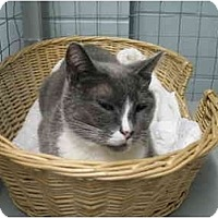 Adopt A Pet :: Sonora - Mission, BC