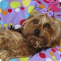 Adopt A Pet :: **BRIE** - Stockton, CA