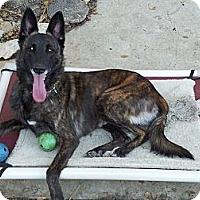 Adopt A Pet :: Nakita in CA - Jamestown, CA