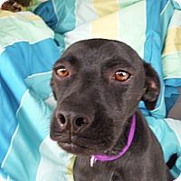 Adopt A Pet :: SOPHIE - Atascadero, CA