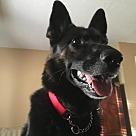 Adopt A Pet :: Max 4159