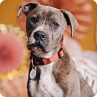 Adopt A Pet :: Humphrey Cooper - Portland, OR