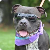 Adopt A Pet :: Clyde - Lebanon, ME