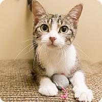 Adopt A Pet :: Siena - Chicago, IL
