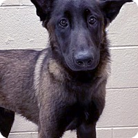 Adopt A Pet :: ADOPTED!!!   Thelma - Channahon, IL