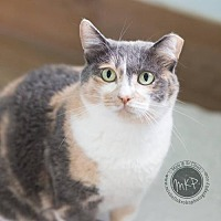 Adopt A Pet :: Momma Lily - Blaine, MN