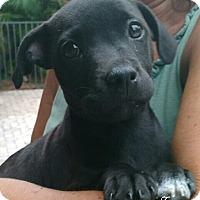 Adopt A Pet :: Mini Cooper - Royal Palm Beach, FL