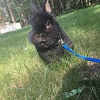 Adopt A Pet :: Thumper - Portland, ME