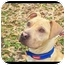 Photo 1 - American Pit Bull Terrier Mix Puppy for adoption in Tampa, Florida - Zeus