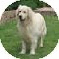Adopt A Pet :: Hank - Denver, CO